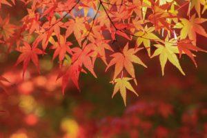 ストレスは秋で解消!健康管理が出来る3つの「秋」