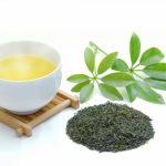 夏に受けた紫外線は緑茶でリセット!マルチな効果で健康に!